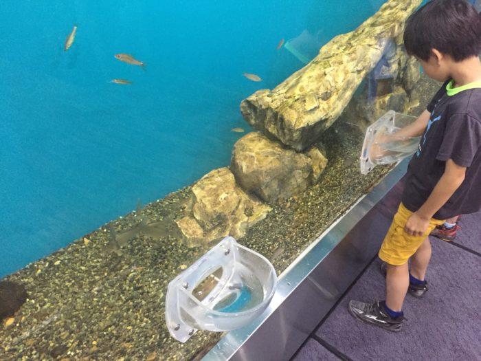 不思議な形の魚のタッチング水槽