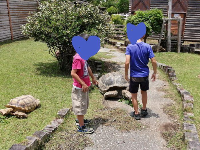 動物ふれあい村のゾウガメ