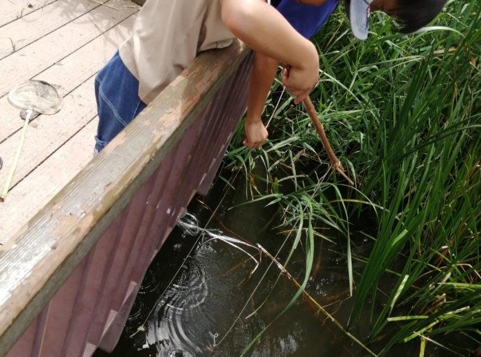 芦屋市総合公園のビオトープ