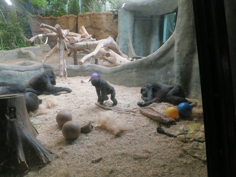 20160828ミルウォーキー動物園_044