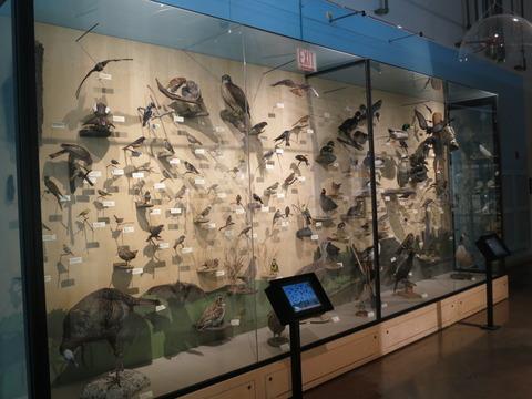 20160827ペギー自然博物館_64