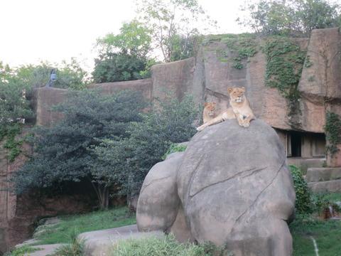 20160821LP動物園_59